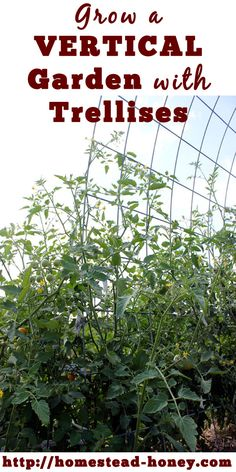Trellises are a great way to save space and create visual interest in your garden. | Homestead Honey: Trellises are a great way to save space and create visual interest in your garden. | Homestead Honey
