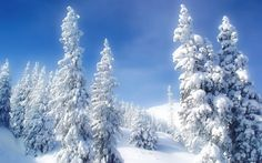 snowy pines - Google Search
