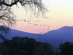 Paso de Grullas sobre la Sierra de Pela.