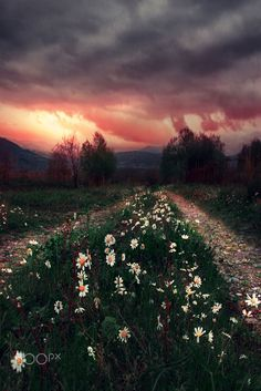 Road of flowers.. by Makis Bitos on 500px