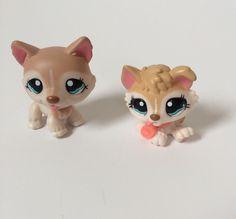 For Sale!! http://stores.ebay.com/bozsnewtoyou  Littlest Pet Shop 1012 1013  Tan White Husky Dogs Blue Eyes adoption center LPS #Hasbro