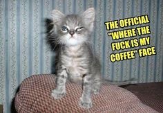 Come and get Your share! http://coffeecupconnoisseur.com/joining-our-team-for-your-success/ #images, #funny