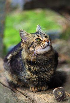 rokuthecat:  Kitty by dio_0 135mm,animal,cat,dof,look,vignette,eyes,fur,green,kitten,kitty