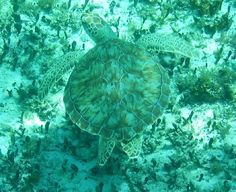 Faro Celerain Eco Park: Sea turtle