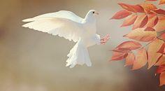 Aslında hayata huzurla devam etmek mümkün. Huzur sadece elde edemediğimiz bir şey değil. Elde ettiğimizde de koruyamadığımız bir kavram. Fakat Huzurlu bir yaşam için bu 5 şeyi değiştirmemiz yeterlidir.
