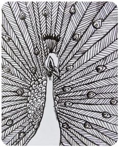Black and White Ink Peacock Original Drawing