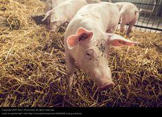 Foto 'Komm her, Trüffelmann! My Portfolio, Stock Foto, Animals, Pictures, Farm Animals, Guys, Funny, Animales, Animaux