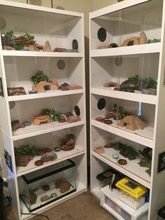 Image result for DIY leopard gecko shelves, habitat