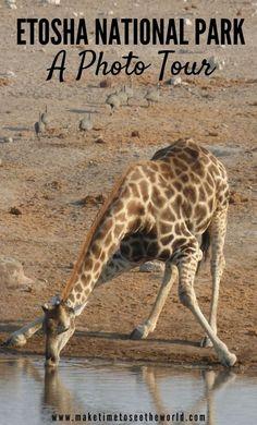 Etosha National Park Namibia Photo Tour: Join us as we take a virtual tour around one of the most unique National Parks in Africa. ***************************************** Etosha National Park | Etosha Photo Tour | Etosha National Park Namibia