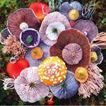 O fotgrafo jillbliss capturou diversos cogumelos em suas andanas O resultado deu incio a srie Nature Medleys Quantas formas e cores natureza cogumelos jillbliss fotografia naturemedleys followthecolours ftcmag fungi flora nature