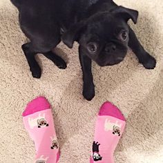 Who wore it better? PC: IG user @eevee_the_pug
