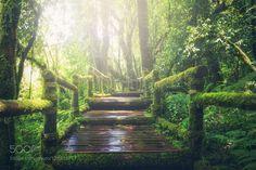 Wooden bridge in tropical rain forest by SasinTipchai