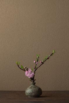 2012年4月13日(金)   一枝ながら「百花の春」です。   花=唐桃(カラモモ)   器=高麗青磁堆白油壺(高麗時代)
