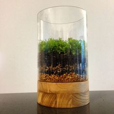 How to Make a Moss Terrarium ~ One layer each gravel, activated charcoal, filter/screen such as Spanish moss or landscape fabric to keep the soil in place, cactus potting soil, plants