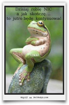 Animals Discover Funny pictures about Critic Frog. Oh and cool pics about Critic Frog. Also Critic Frog photos. Beautiful Creatures Animals Beautiful Majestic Animals Animals And Pets Baby Animals Baby Cats Cutest Animals Funny Frogs Cute Frogs Beautiful Creatures, Animals Beautiful, Majestic Animals, Beautiful Fish, Unique Animals, Animals And Pets, Baby Animals, Baby Cats, Smiling Animals