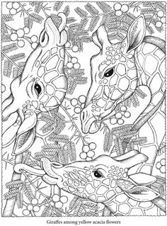 Colouring-in page - sample from 'Creative Haven NatureScapes Coloring Book' via Dover Publications ~s~