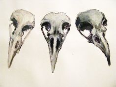 Raven Skull studies 2 by sixhotboxtamales on deviantART