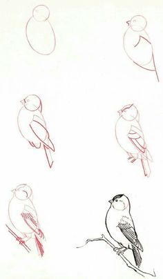 New drawing animals step by step realistic ideas - . New drawing animals step by step realistic ideas – Drawing Lessons, Drawing Techniques, Art Lessons, Bird Drawings, Animal Drawings, Drawing Sketches, Pencil Drawings, Drawing Animals, Sketching