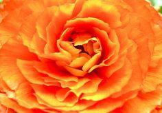 Orange Flower Creative Photo Orange Spirit. Photo made by Solveig Schmid.