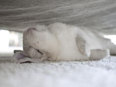 Bunny's secret nap spot