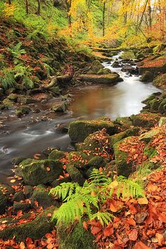 Autumn, Colden Clough, Yorkshire, England photo via english Looks like something from a fairytale :) Image Nature, All Nature, Amazing Nature, Beautiful World, Beautiful Places, Beautiful Pictures, Autumn Scenery, Nature Scenes, Belle Photo