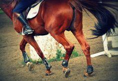 jon van gilder photography / #horse #equestrian #burbank