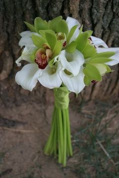 Green Cymbidium orchids surrounded by White Miniature Calla Lilies, lovely bouquet