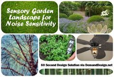 Take your sensory room outdoors. Among other posts, here is a step-by-step on how Sandy Hubbard worked with a landscape designer for a child who is particularly sensitive to noise.  Lots to learn, from working with pros to #DIY easy tips to do today. 60 SECOND SOLUTIONS: Natural white noise turns patio into soothing and enjoyable family space