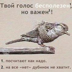 просто-право Owl, Animals, Animaux, Owls, Animal, Animales, Animais