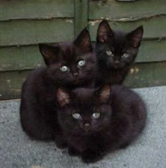 Not long ago, I dreamt a dream in which I had three black kittens.