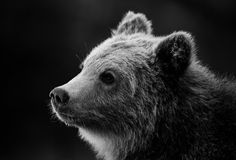 Bear  by peter.h.hansen1