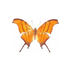 Orange Butterfly ❤ liked on Polyvore featuring butterflies, orange, animals, backgrounds and mariposas