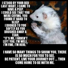 For those who have fur babies at the rainbow bridge...like our Swiper.  <3