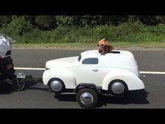 Cuando tu perro tiene más estilo que tú...