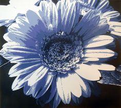 Gerbera Daisy (Blue), 2013. Paper. 16 in x 17 in.