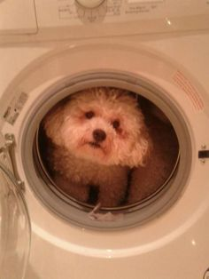 hypoallergenic and washable! (no, not really!)