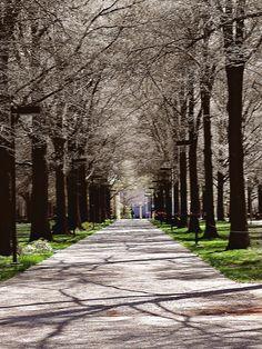 University of Kentucky, Lexington.