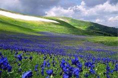 Цветущие Алтайские горы. Красота!   #traveljay #путешествия #Алтай #Горы
