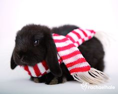 Ebony (Rabbit) - Wrapped up and ready to go!  (pic by Rachael Hale)