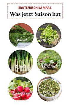 Spinat, Vogerlsalat und Bärlauch kann man schon pflücken, aus geschützter Anzucht gibt's die ersten Radieschen. #märzgemüse #gemüse #regionalesgemüse #regionalessen #servus #servusmagazin #servusinstadtundland Om, Asparagus, Harvest