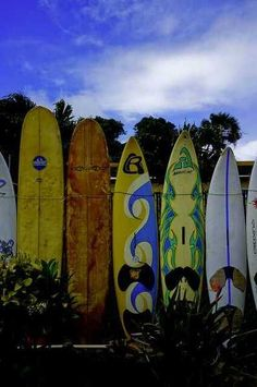 Surfboards line up on the beach at Haiku, Hawaii on the North Shore of Maui. c.
