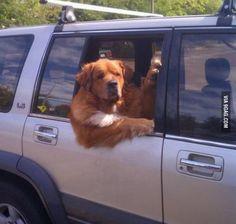 Yo dog get in. No time to explain. - www.sharepx.com
