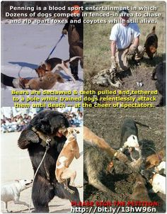 This is cruel in every sense of the word! ! So animal violence and cruelty! !