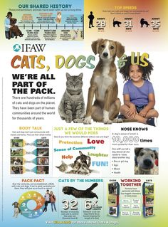 Learn more about cats and dogs with free lesson plans from IFAW.