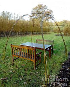 Living Willow Standard Gazebo - available as DIY Kit! @ Kings Barn Trees