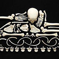 Um esqueleto humano separado e unido novamente para simplificar a ideologia de uma guerra.  Stop Violence surpreende pela criatividade e impõe-se pela mensagem atroz a respeito da humanidade e de seus interesses simples e desumanos - tais como um osso sem vida.