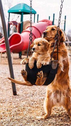 Cute Wild Animals, Baby Animals Super Cute, Cute Baby Dogs, Pretty Animals, Baby Animals Pictures, Cute Dog Pictures, Cute Funny Dogs, Cute Little Animals, Cute Funny Animals