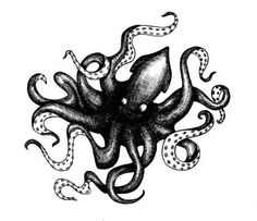 Image result for kraken