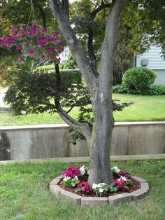 How to make a flowerbed under a tree. Would probably lay fabric down to prevent weeds and fine cuter pavers.