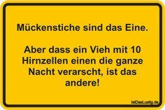 Mückenstiche sind das Eine. Aber dass ein Vieh mit 10 Hirnzellen einen die ganze Nacht verarscht, ist das andere! ... gefunden auf https://www.istdaslustig.de/spruch/206 #lustig #sprüche #fun #spass